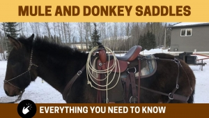 mule saddle education