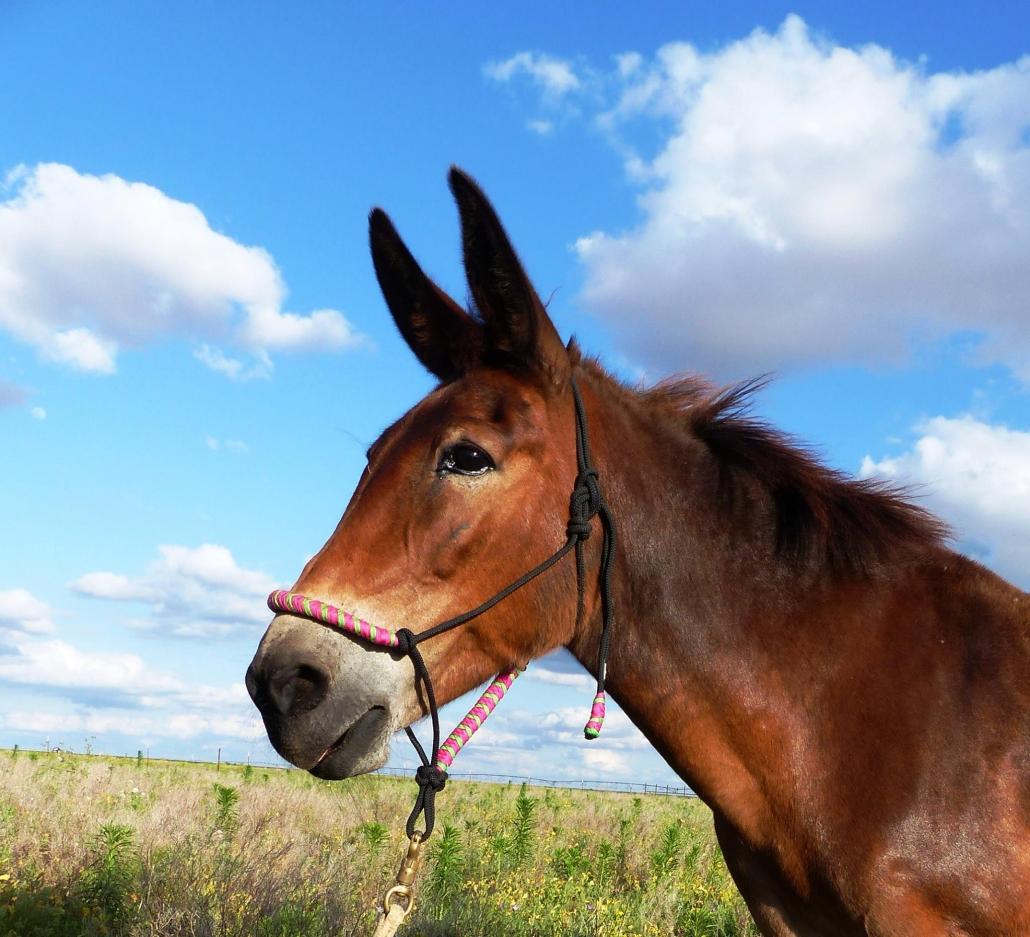 Mule photo