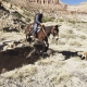 Mule climbing in canyon