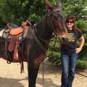 Mule with mule saddle